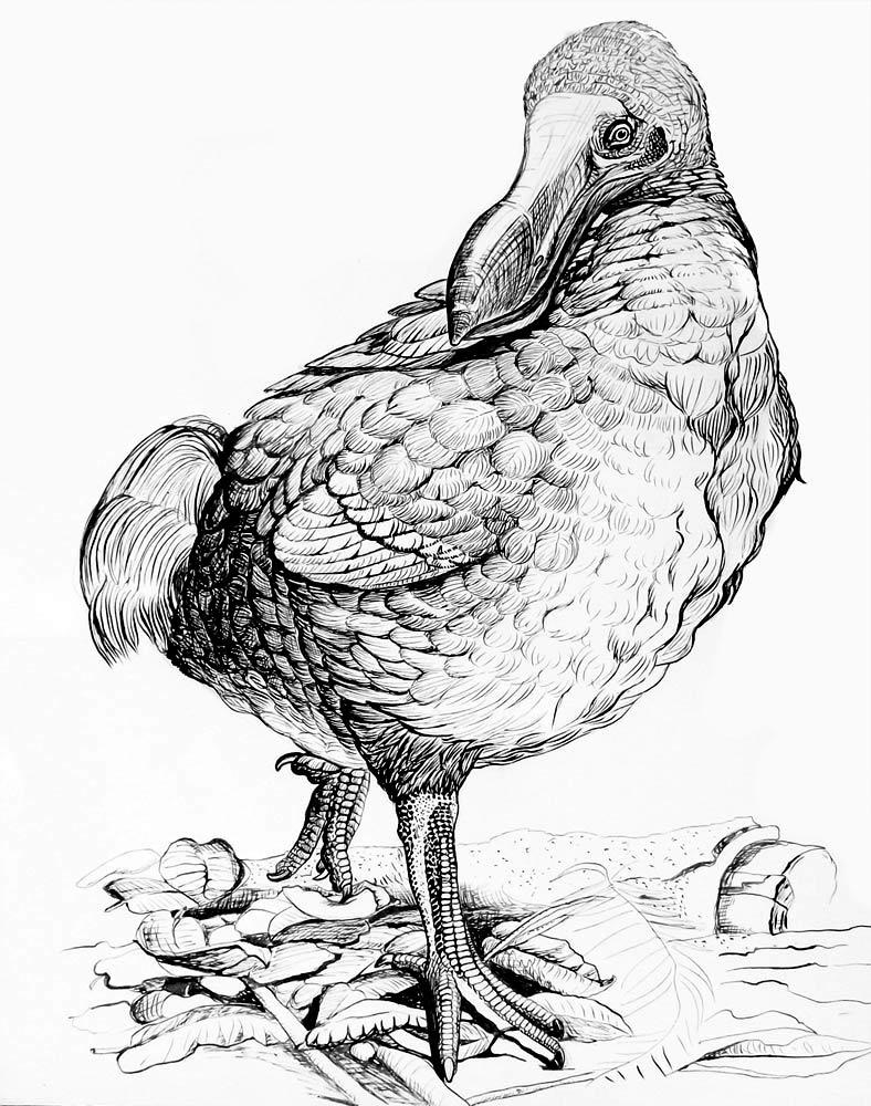 Animales- Aves - Pájaro Dodo