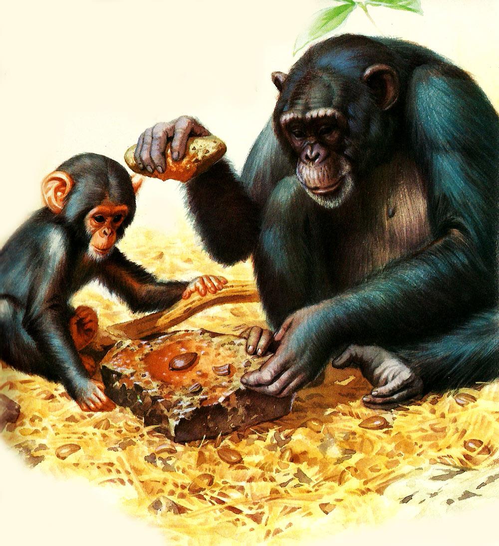Ilustración gratis - Chimpancé madre y su hijo manejando herramientas