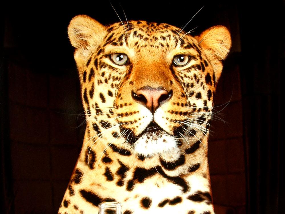 Ilustración gratis - Rostro del leopardo en blanco y negro