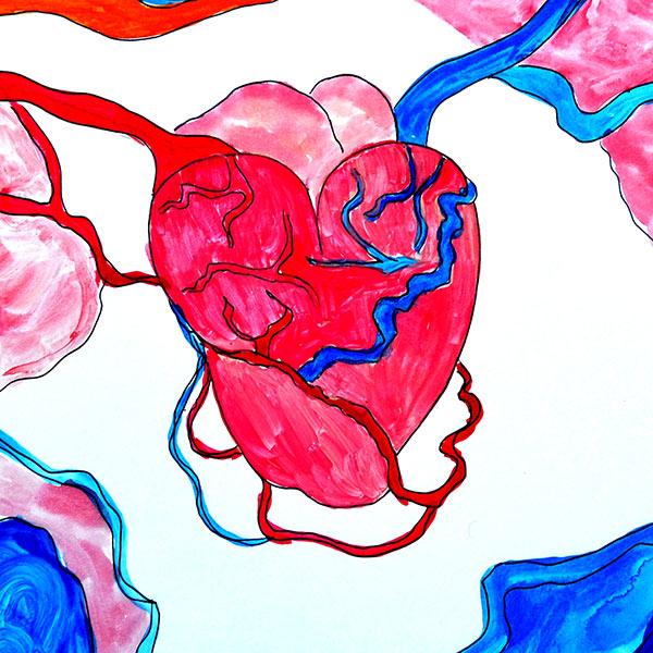 Ilustración gratis - Anatomía de un corazón dentro del cuerpo humano