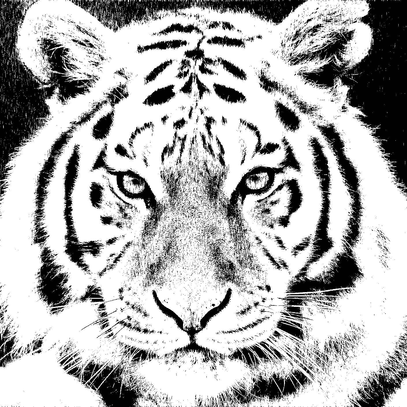 Ilustración gratis - Tigre de rostro sereno