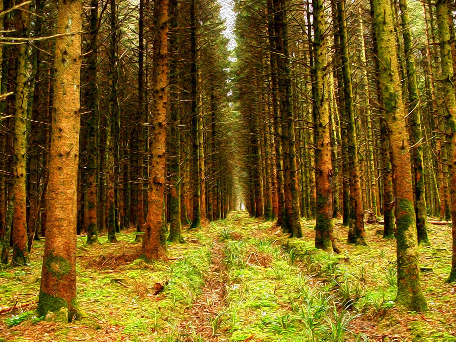 Ilustración gratis - Bosque de pinos en Irlanda