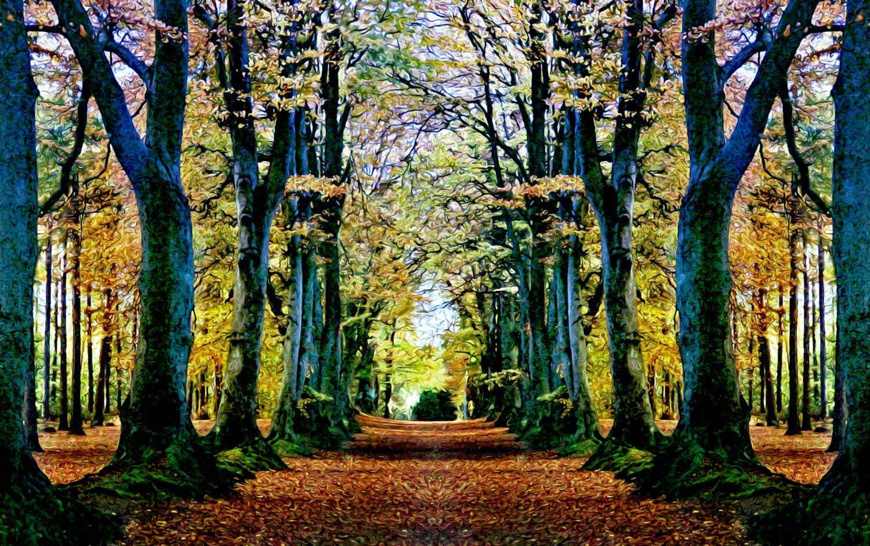 Ilustración gratis - Árboles formando un camino en el bosque
