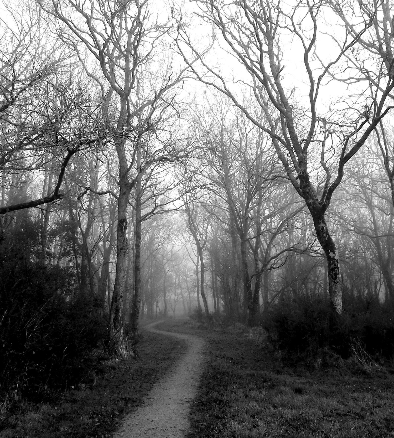 Paisaje con árboles y niebla - Efecto pintura al óleo