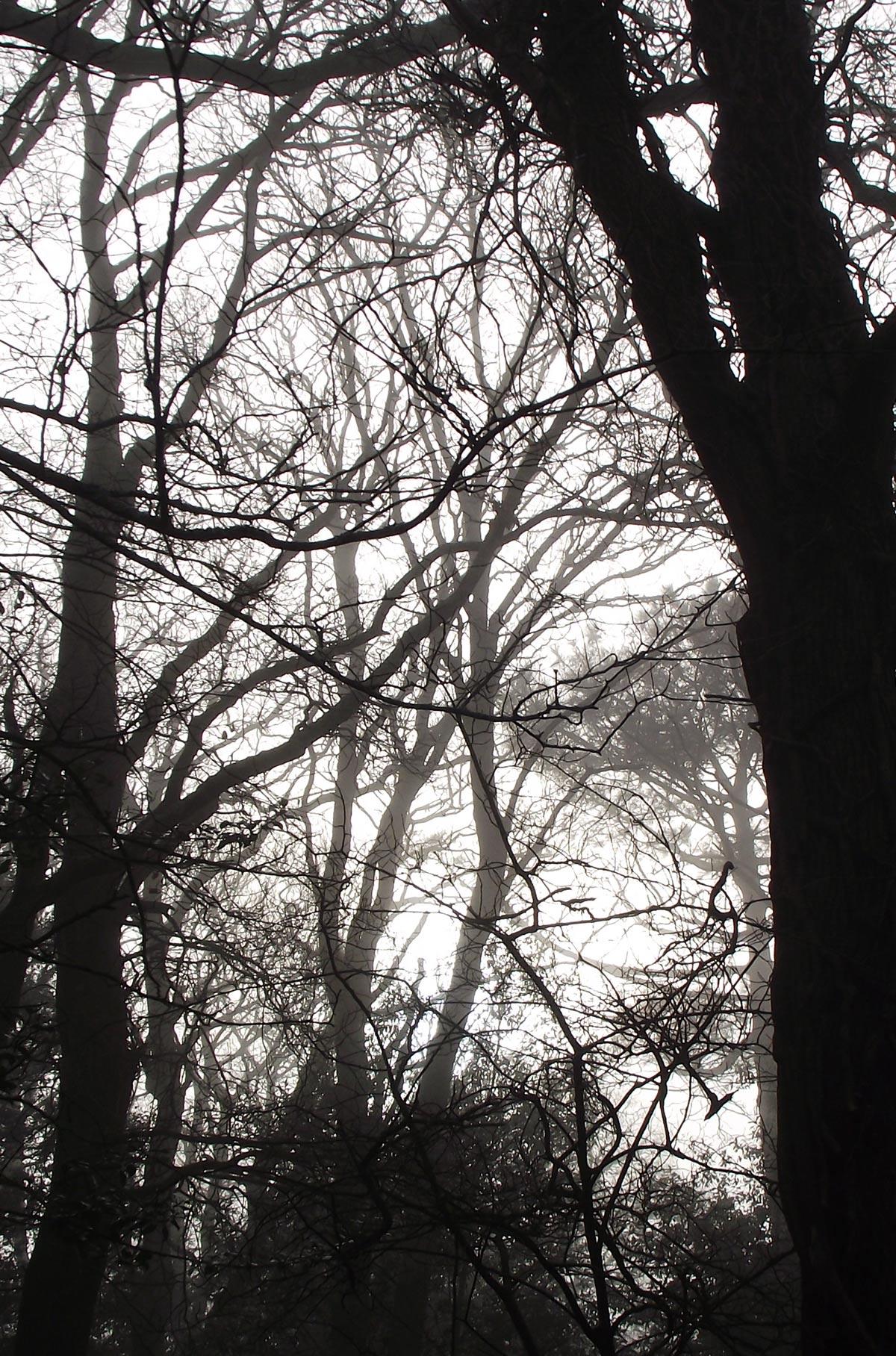 Ilustración gratis -Paisaje con árboles y niebla