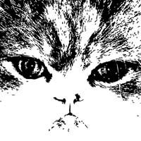 Ilustración del rostro de un gato persa