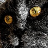Gato negro de ojos amarillos fuego