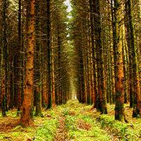 Bosque del norte de Irlanda