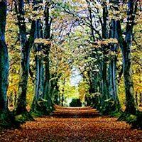 Árboles formando un camino en el bosque