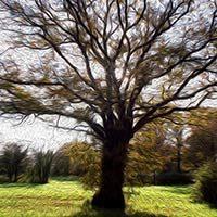 El árbol francés