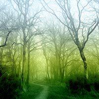 Camino con árboles y niebla