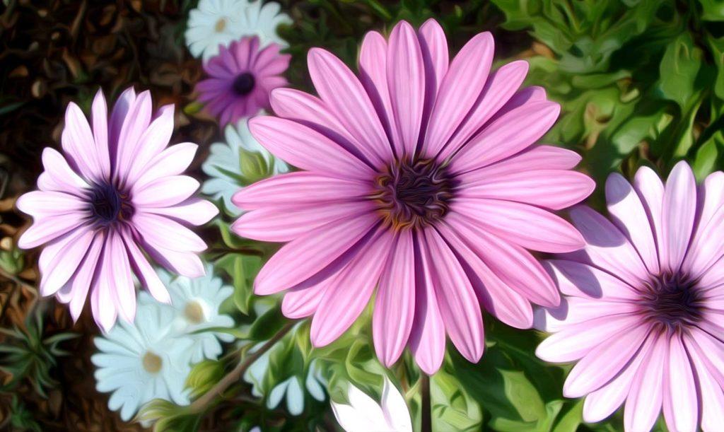 flores margaritas pintura digital