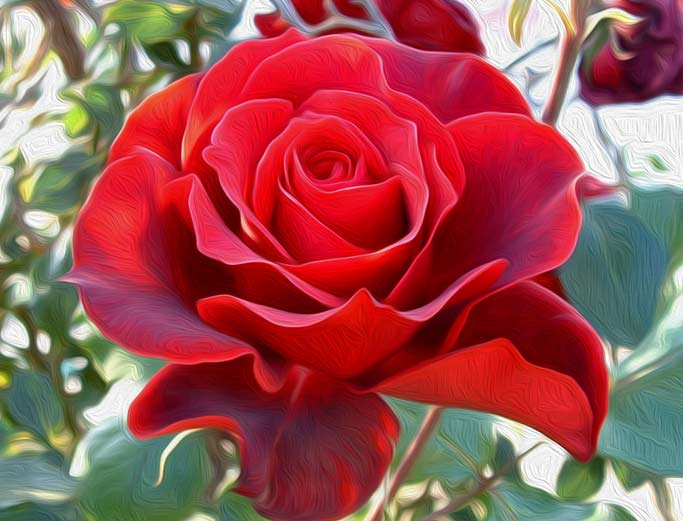 pintura Colección de rosas