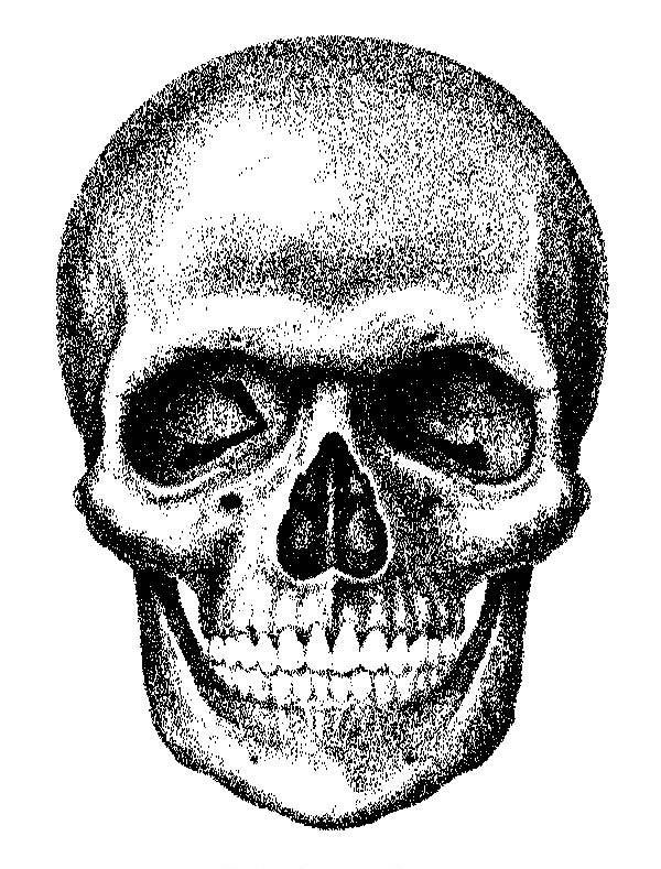 Ilustración gratis - Ilustraciones de una calavera o cráneo humano